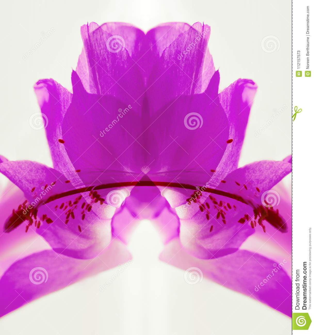 Ultraviolet Abstract of Cactus Flower