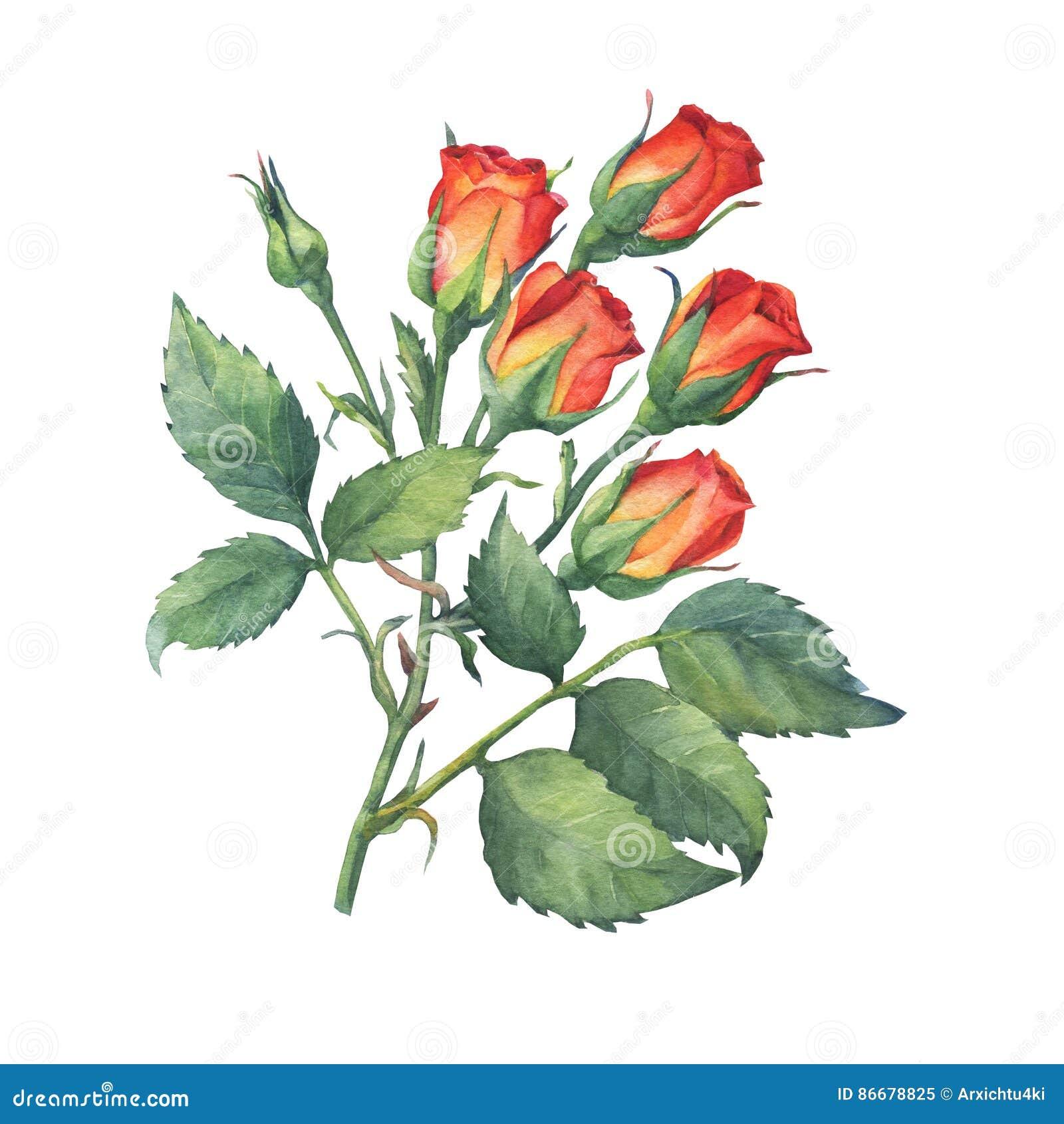 Um único ramo de mini rosas vermelho-alaranjadas com folhas e botão do verde