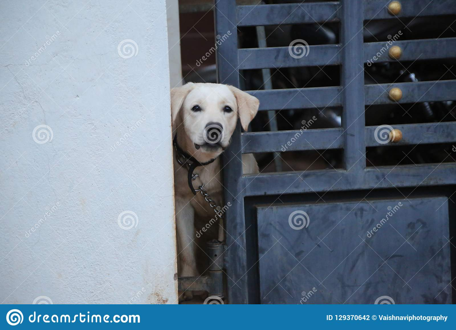 Um ao lado do cão
