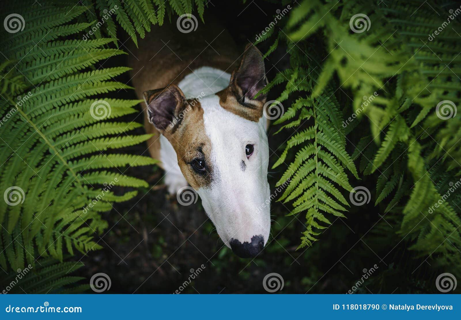 Um cão em uma floresta misteriosa