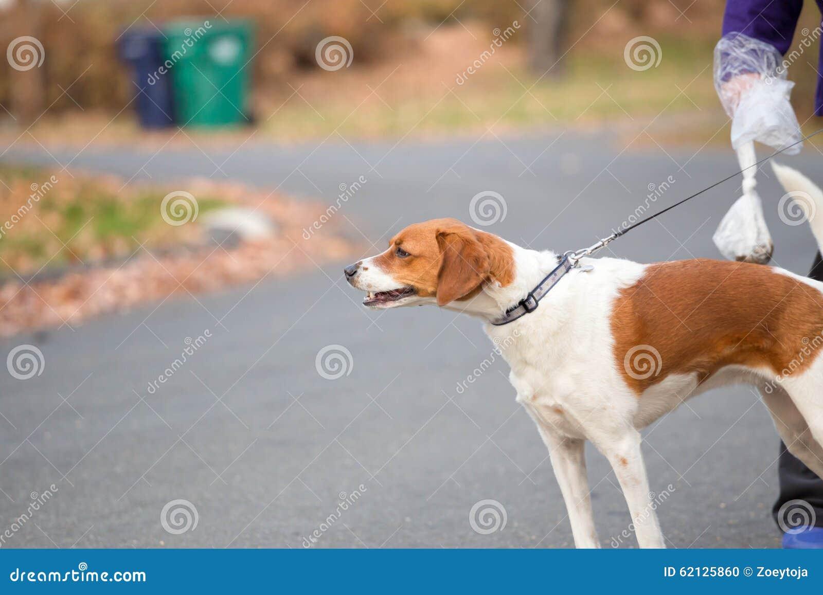 Um cão em uma trela que anda abaixo de uma rua com ela é