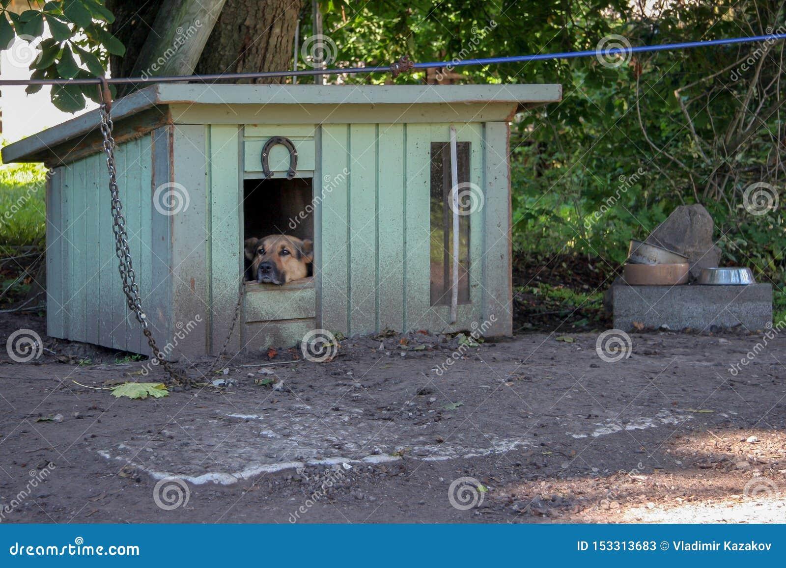 Um cão-pastor triste senta-se em uma cabine em uma corrente e olha-se afastado Estão próximo as bacias para o alimento