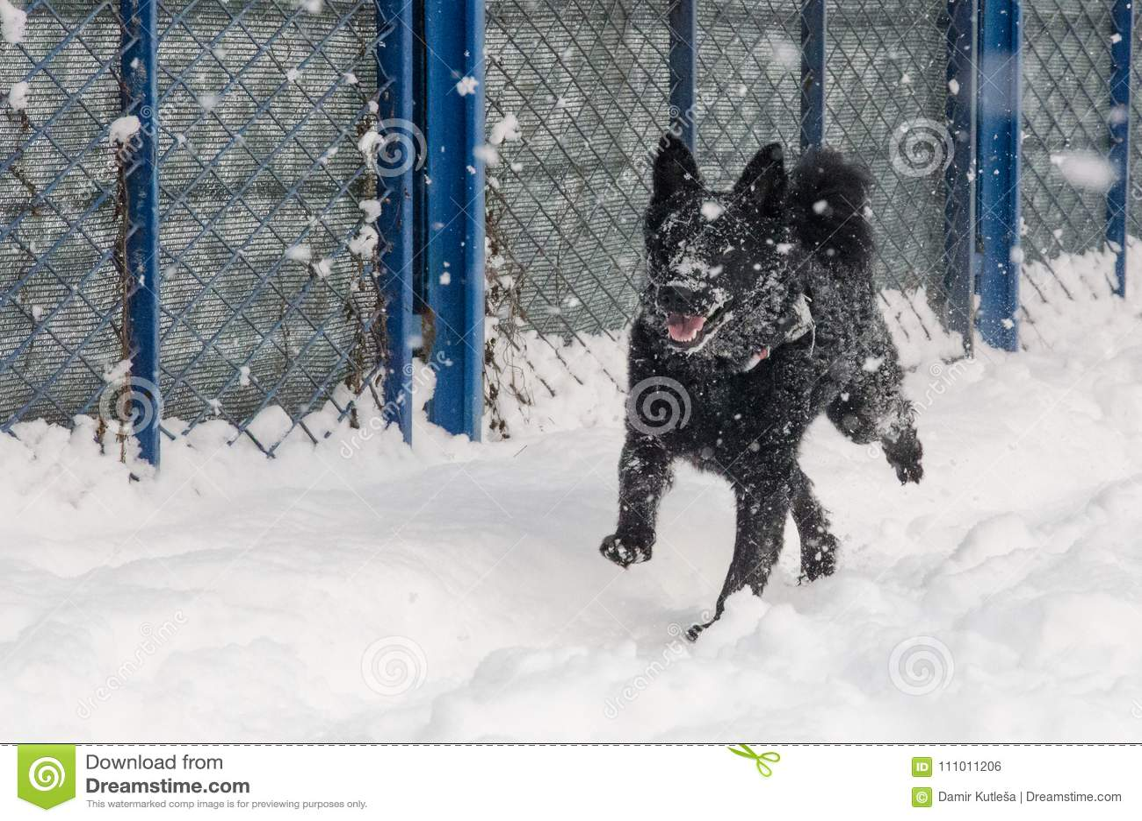 Um cão preto na neve