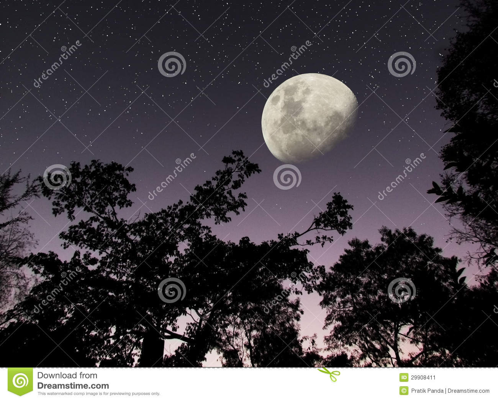 A lua stars o céu nocturno escuro da floresta