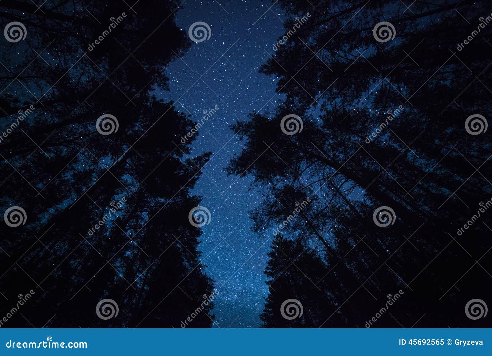 Um céu noturno bonito, a Via Látea e  árvores