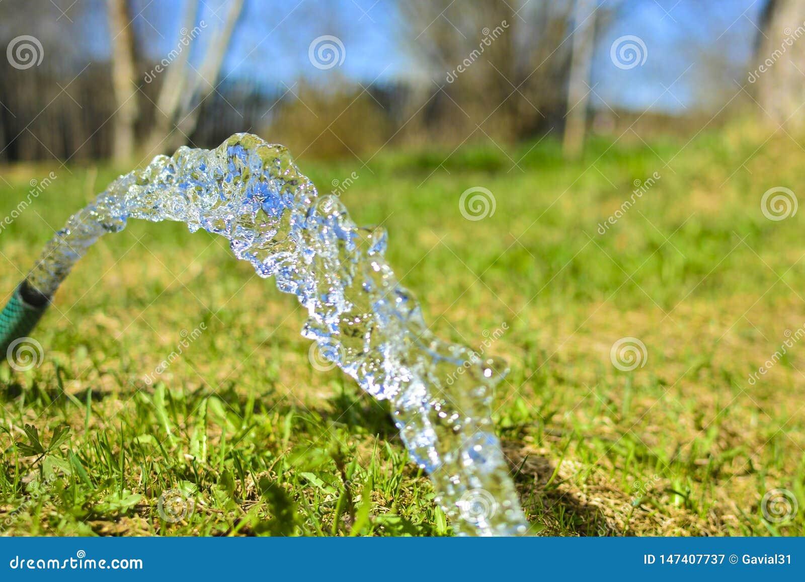 Um córrego da água fresca, limpa, fresca de uma mangueira molhando Conceito: plantas molhando no jardim, agua potável em um local