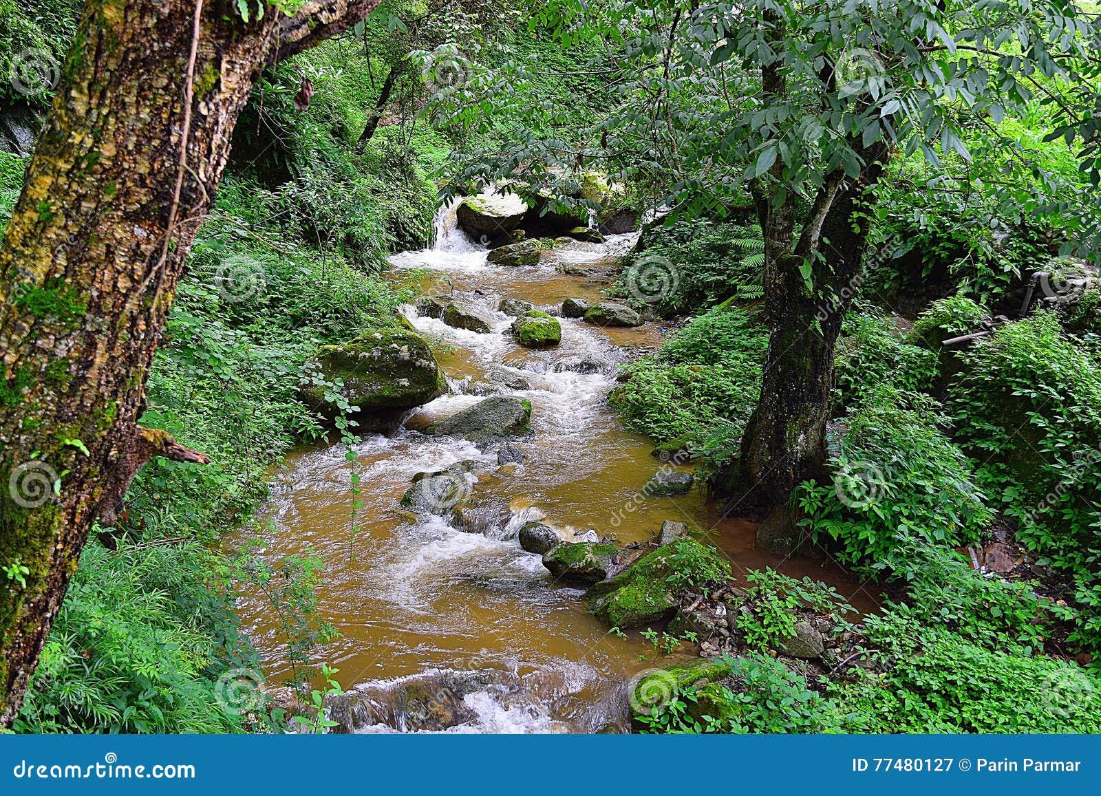 Um Córrego Que Corre Através Da Floresta Em Montanhas Himalaias