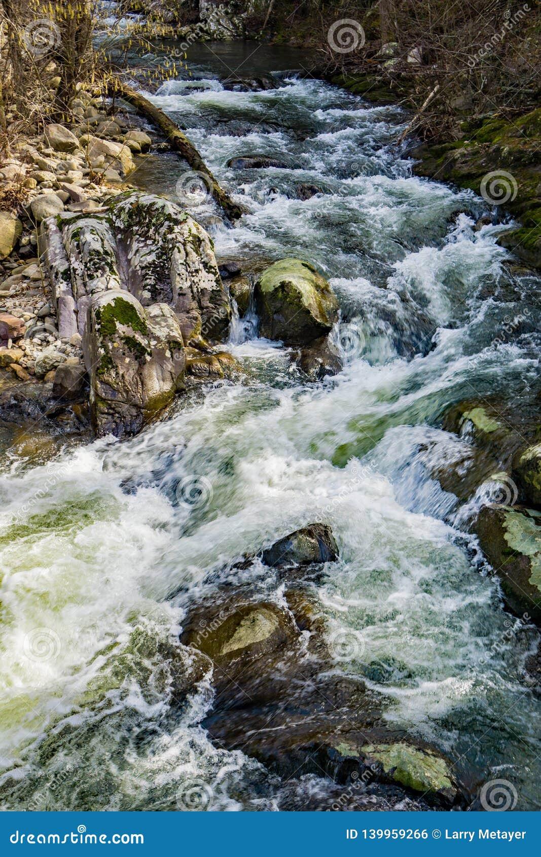 Um córrego selvagem da truta da montanha em Ridge Mountains azul