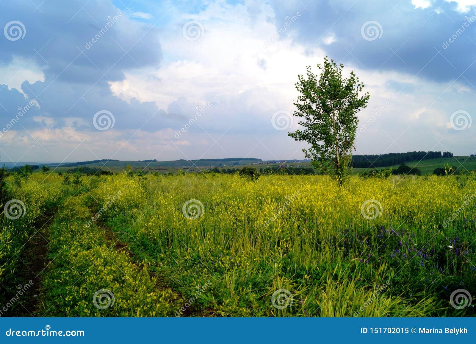 Um campo com flores amarelas sob um céu pesado