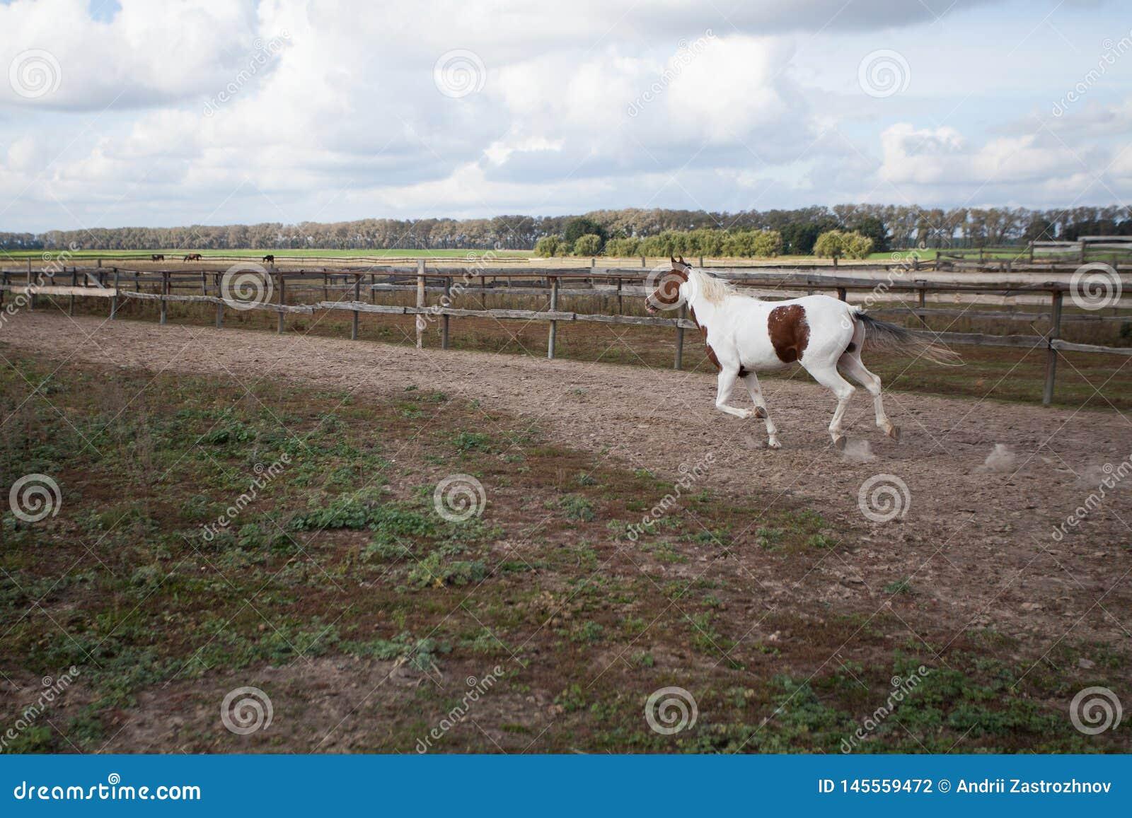 Um cavalo novo que corre em um estábulo em um galope