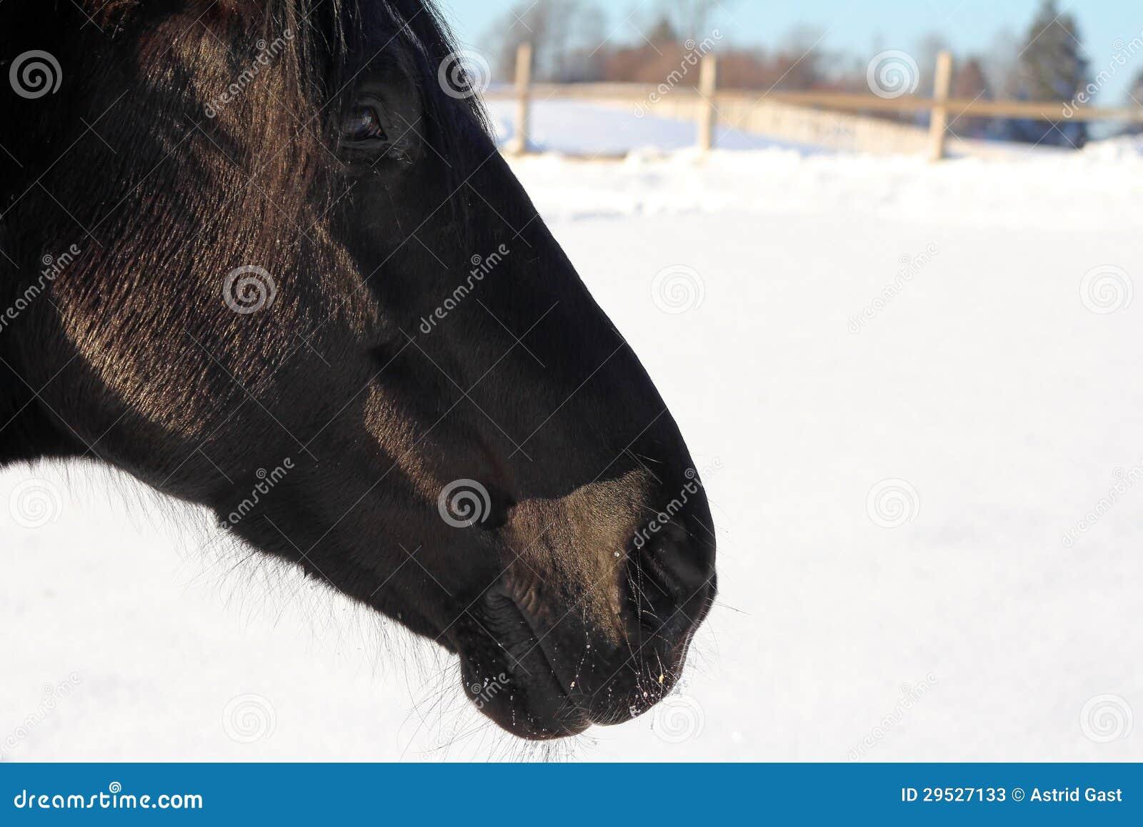 Um cavalo realiza-se igualmente no inverno fora