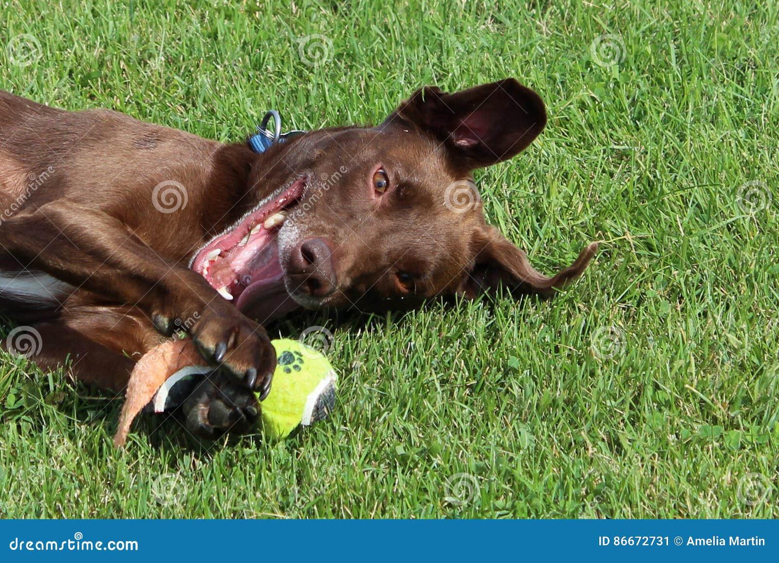Um close up de um brinquedo favorito do cão
