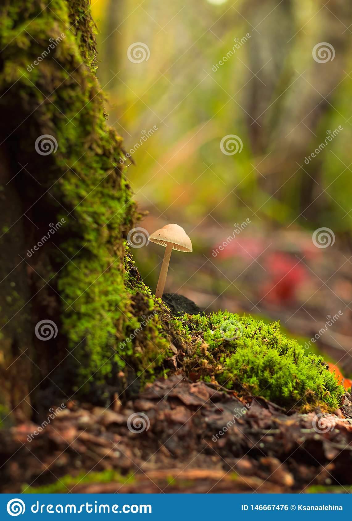 Um cogumelo cresce no close-up da floresta
