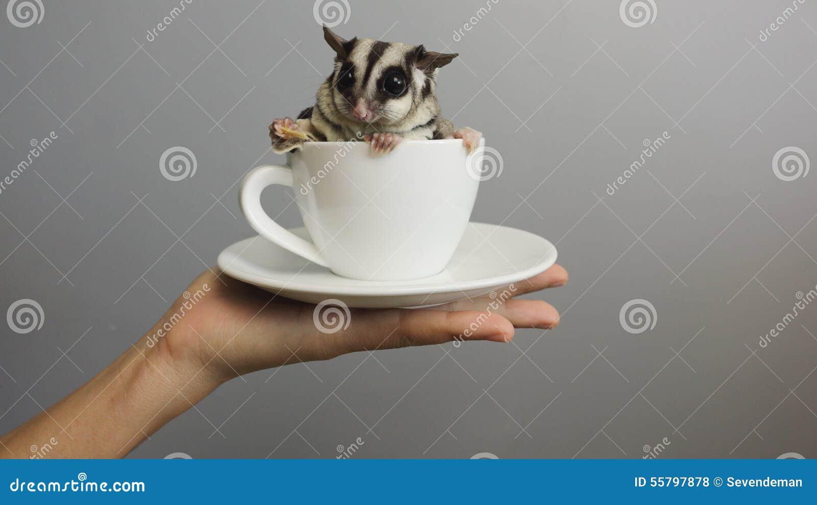 Um copo do sugarglider