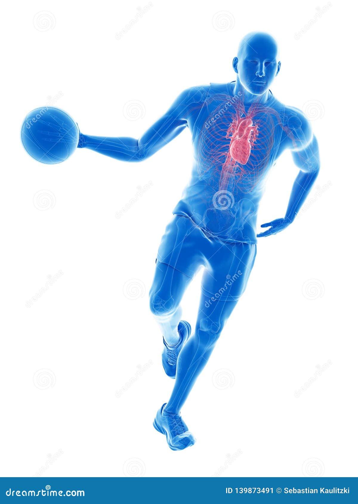 Um coração dos jogadores de basquetebol
