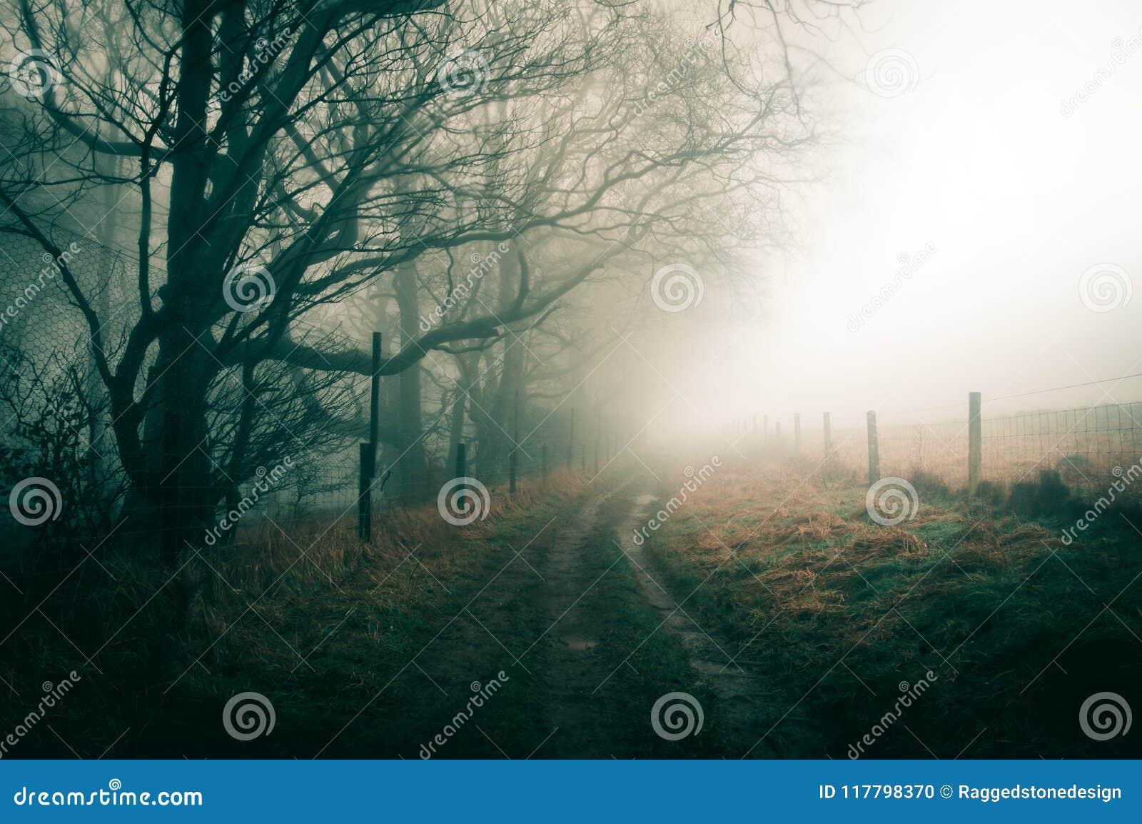 Um dia de invernos nevoento atmosférico com um trajeto que segue a borda da floresta, com um temperamental desaturated edita