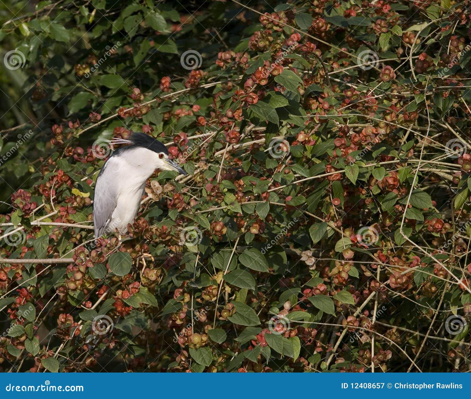 Um Egret dentro em uma árvore