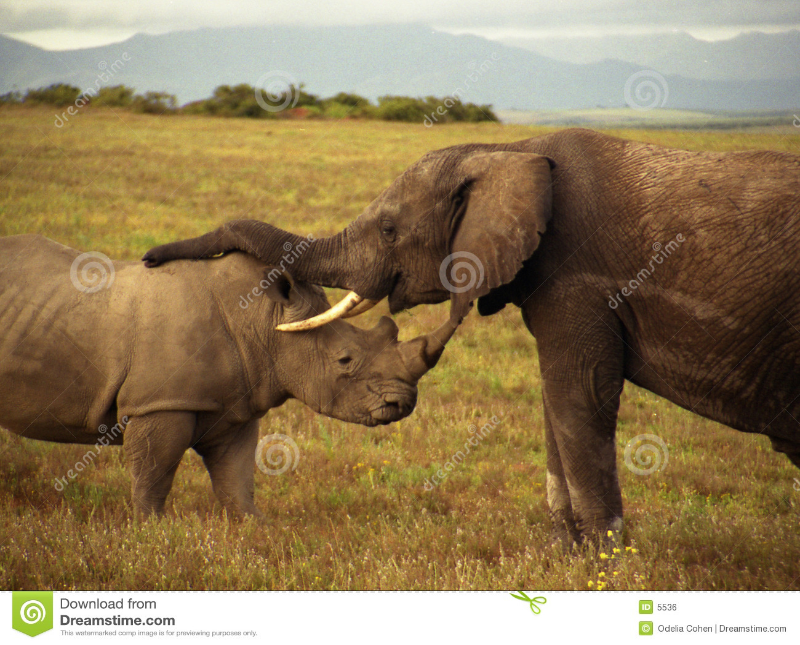 Um elefante e um rinoceronte