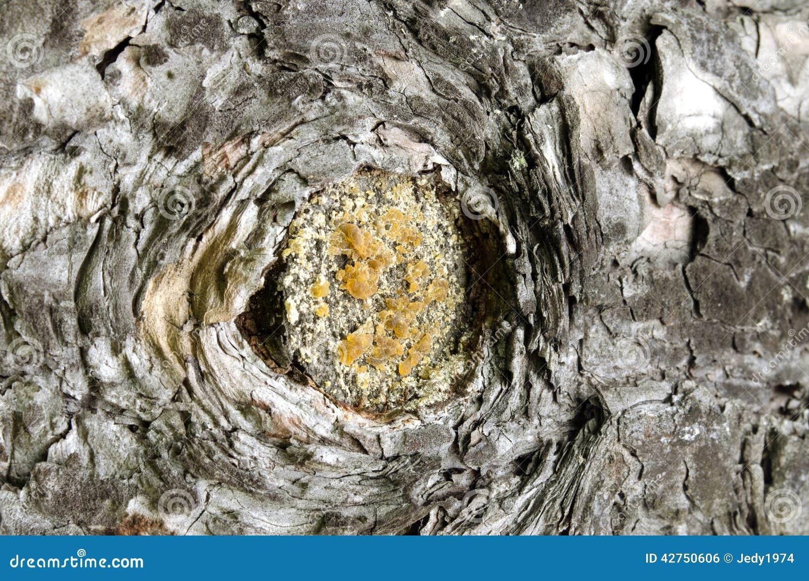 Um furo pequeno na casca de uma árvore