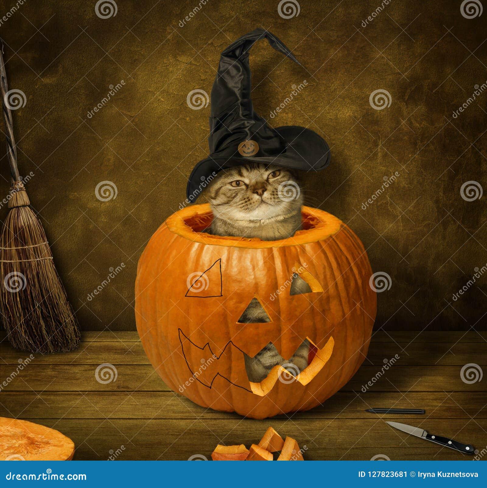 Um gato em um pampkin