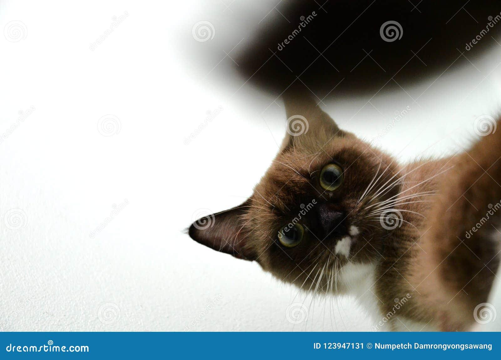 Um gato marrom com sua cauda obscura