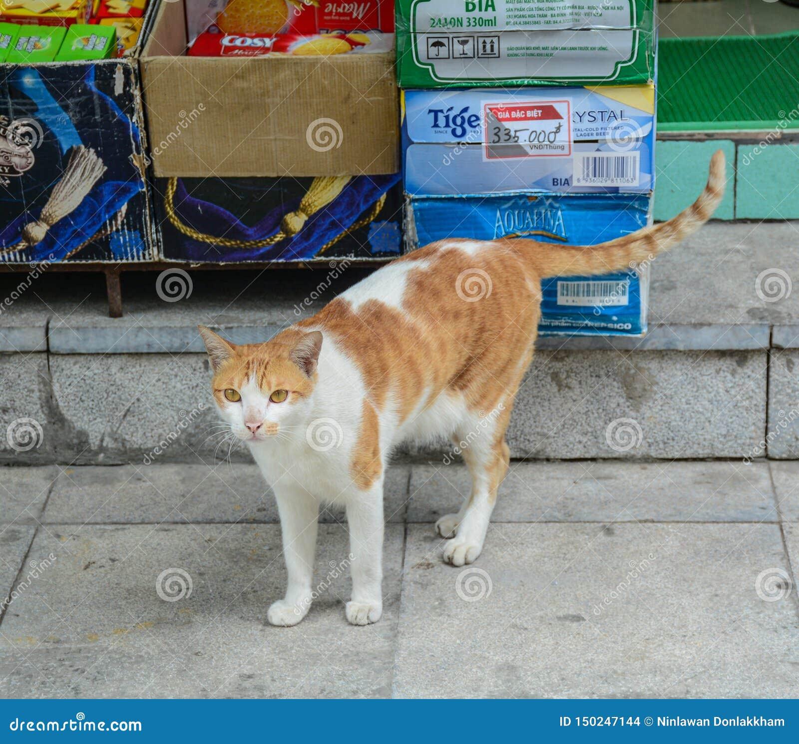 Um gato marrom na casa do campo