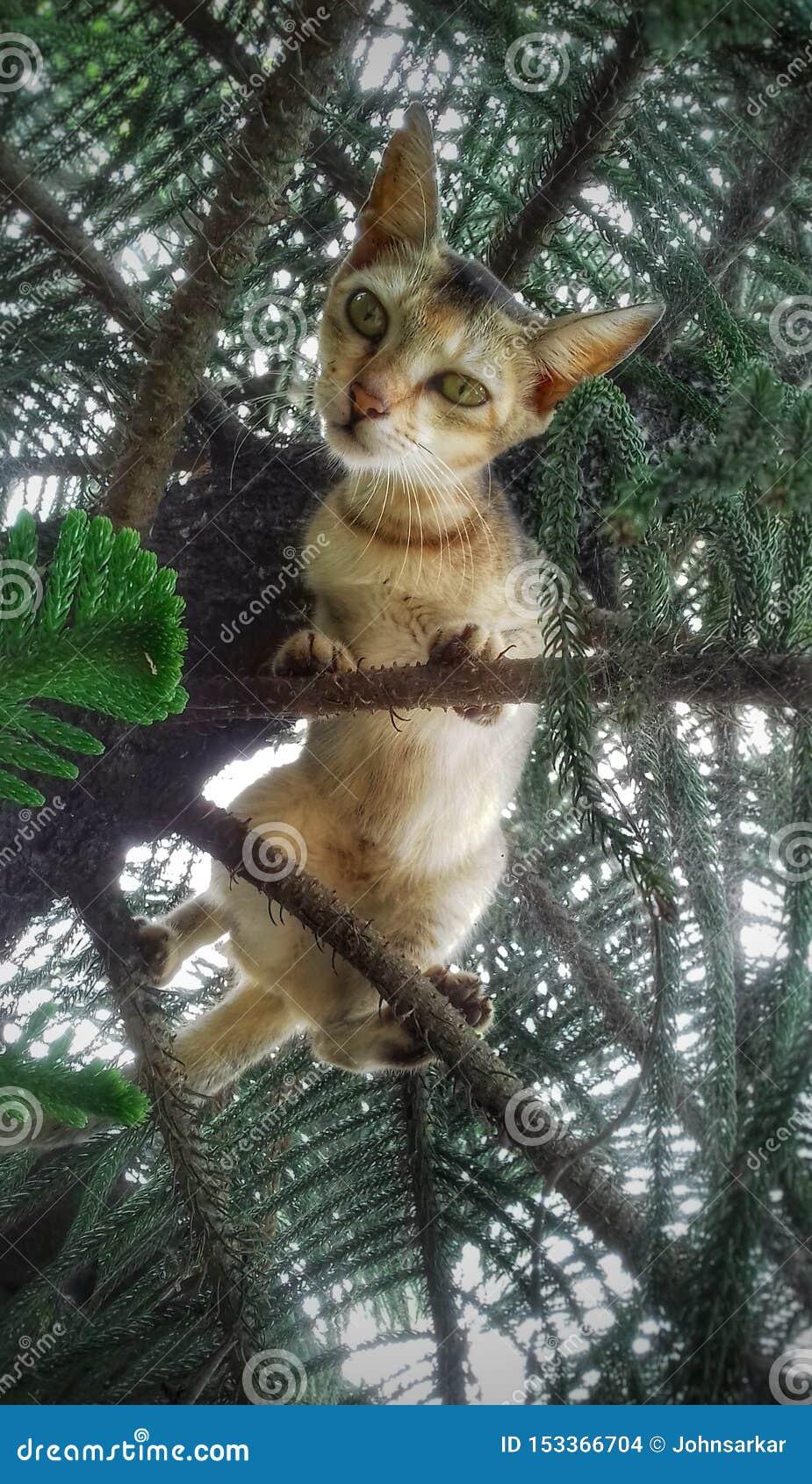 Um gato pequeno que olha fixamente da árvore