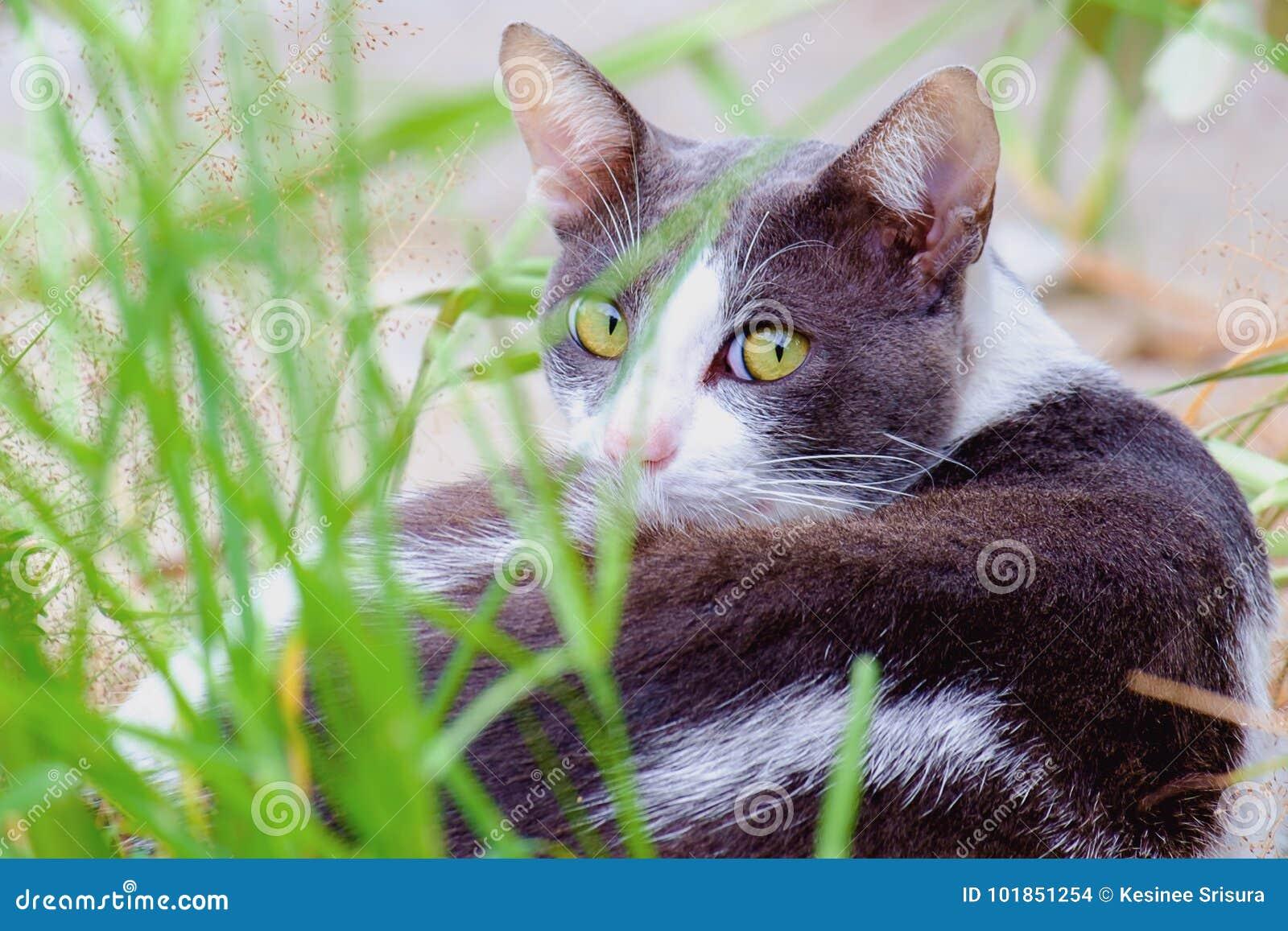 Um gato que encontra-se na grama verde