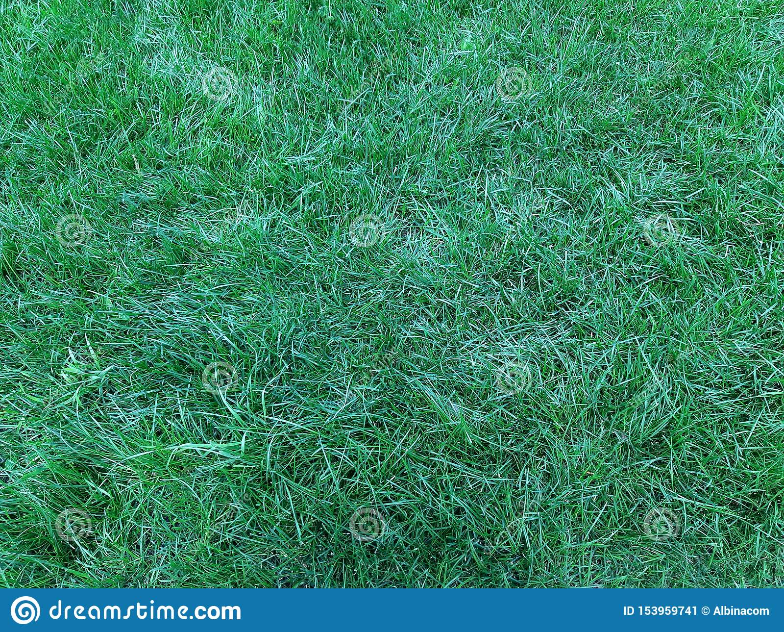 Um gramado verde, fundo natural excelente