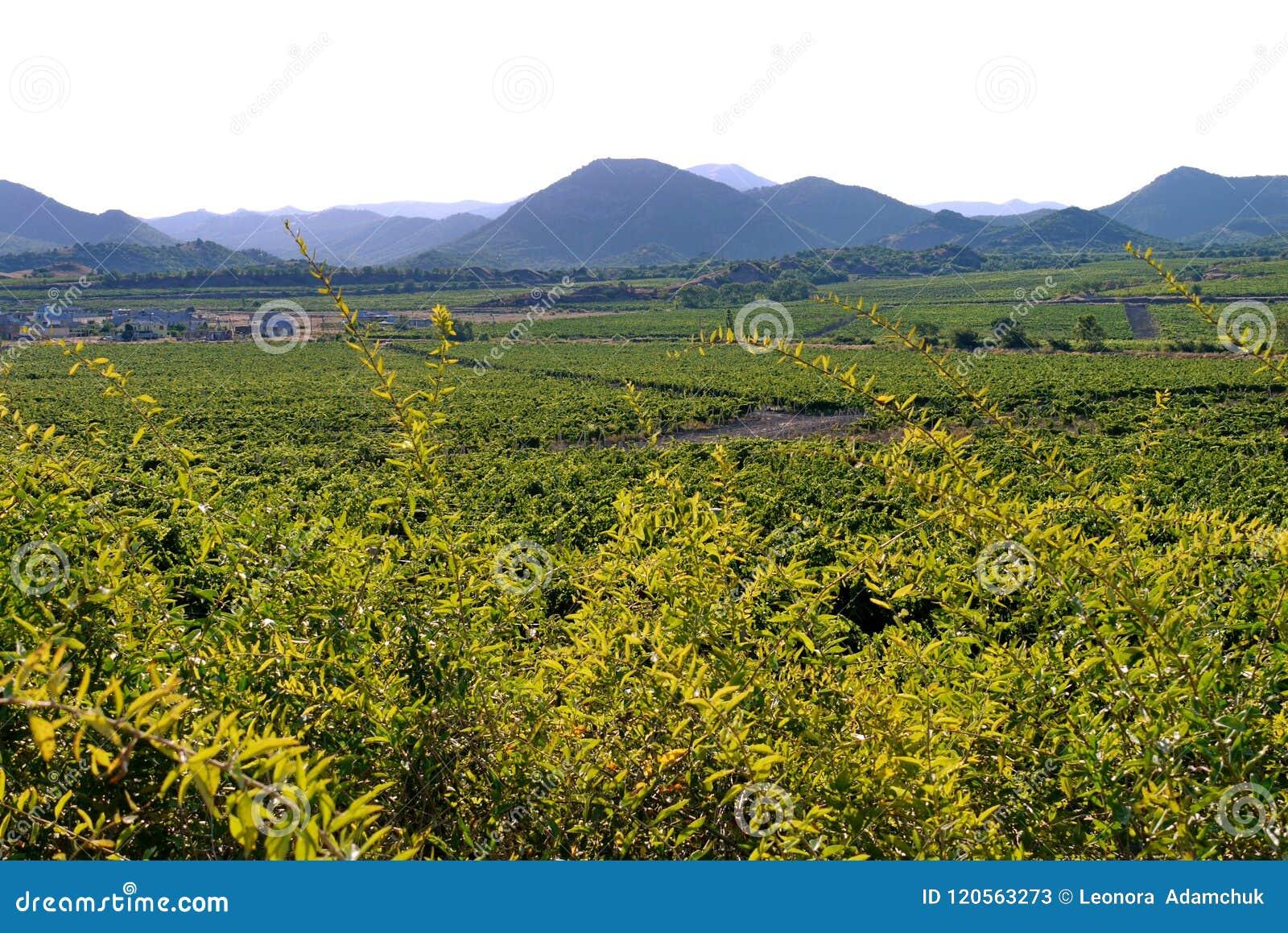Um grande campo com as plantações esquadradas com vegetais plantados A construção das explorações agrícolas que estão no centro e