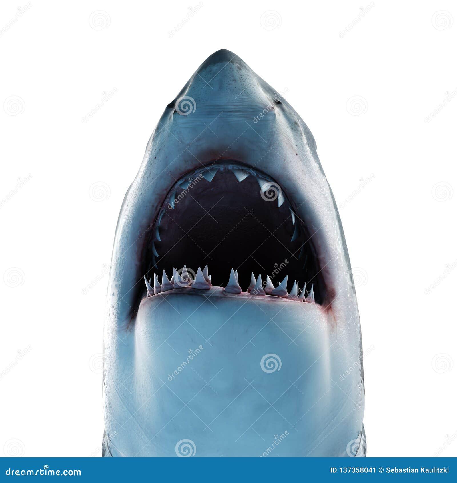 Um grande tubarão branco