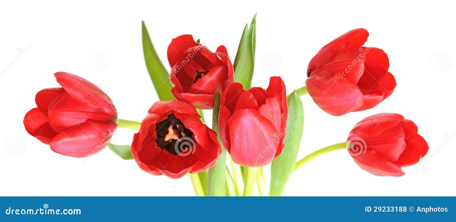 Download Um Grupo Da Tulipa Vermelha Foto de Stock - Imagem de romance, nave: 29233188