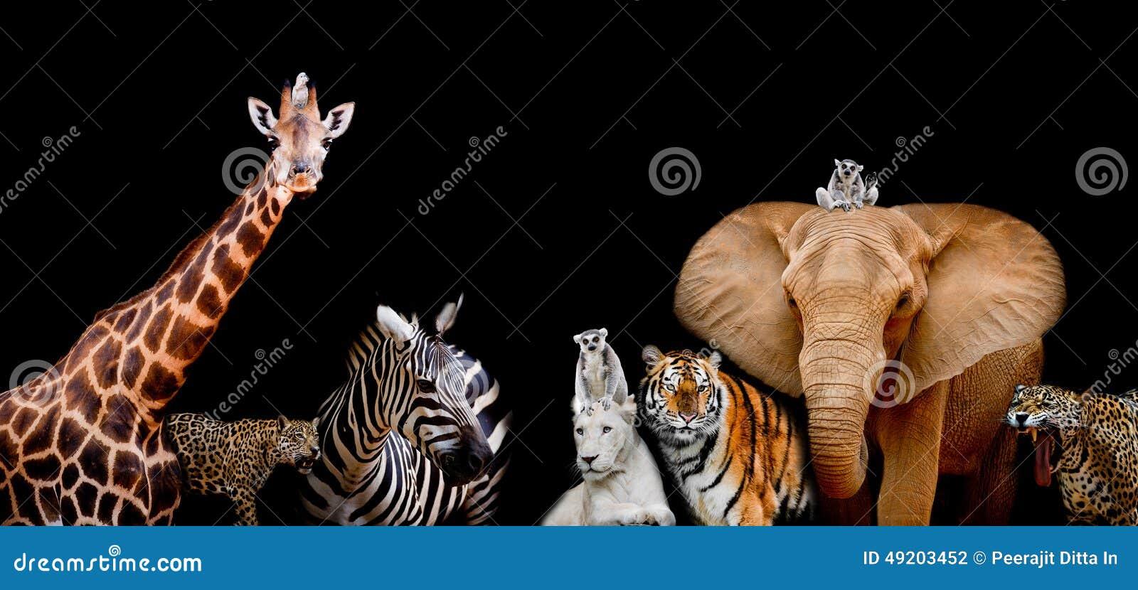 Um grupo de animais está junto em um fundo preto com texto