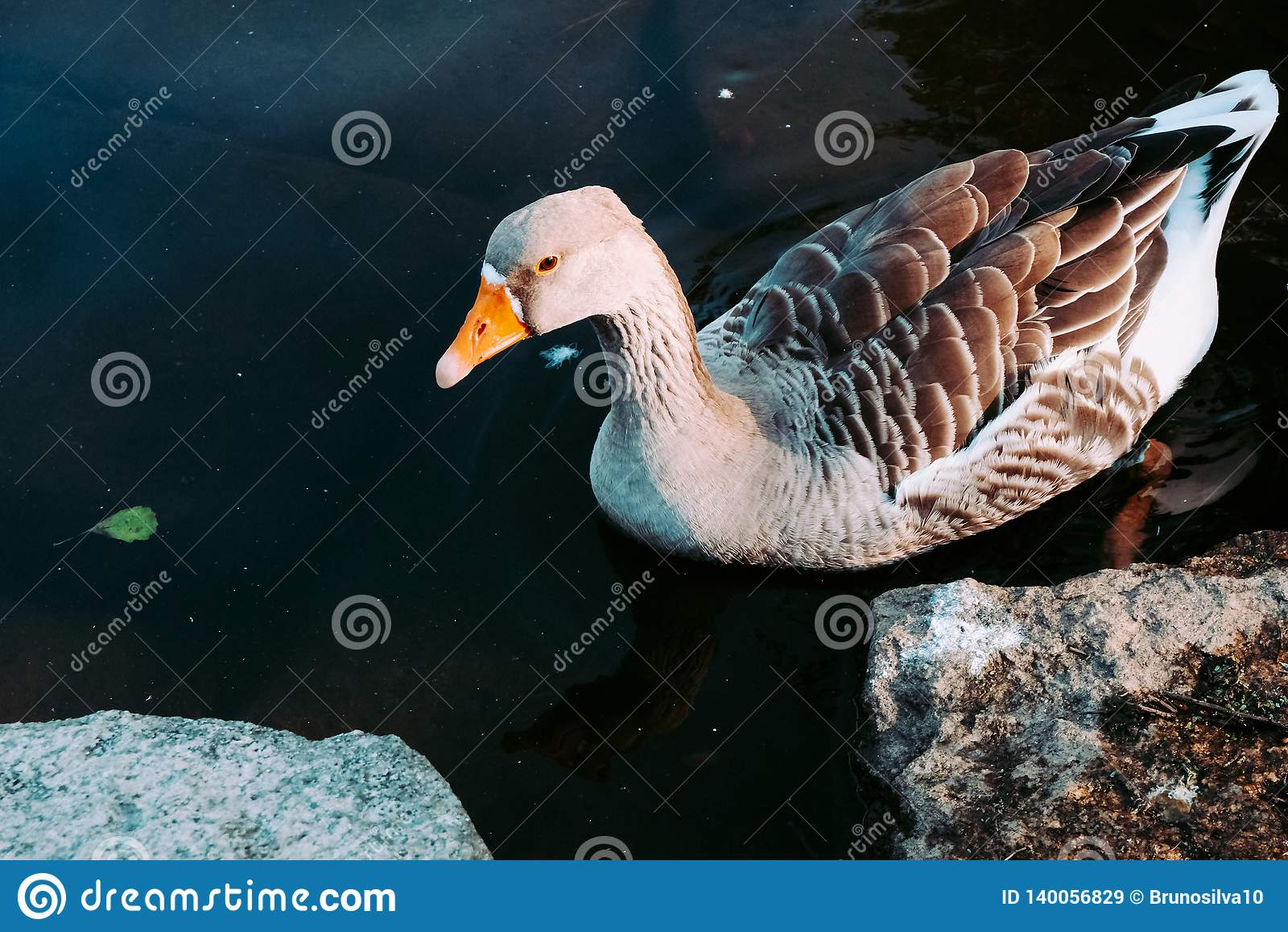 Um grupo de patos no lago