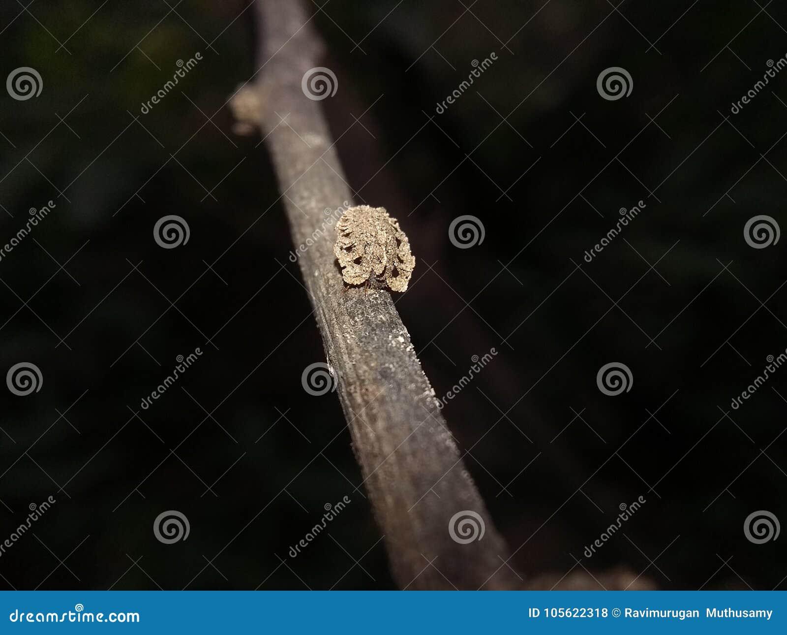 Um inseto impedido