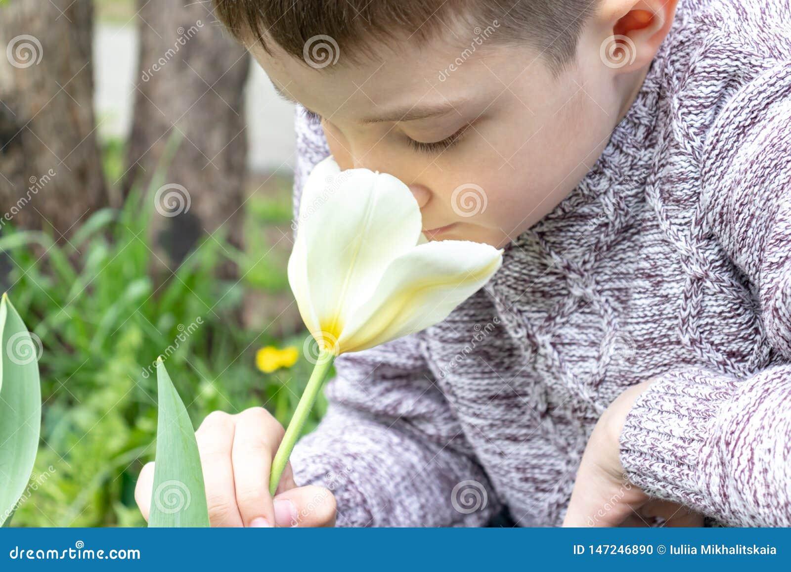 Um jardim branco de cheiro da flor da tulipa do menino caucasiano preteen na primavera