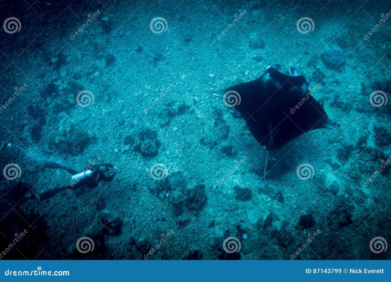 Um Manta Ray e um mergulhador no manta apontam
