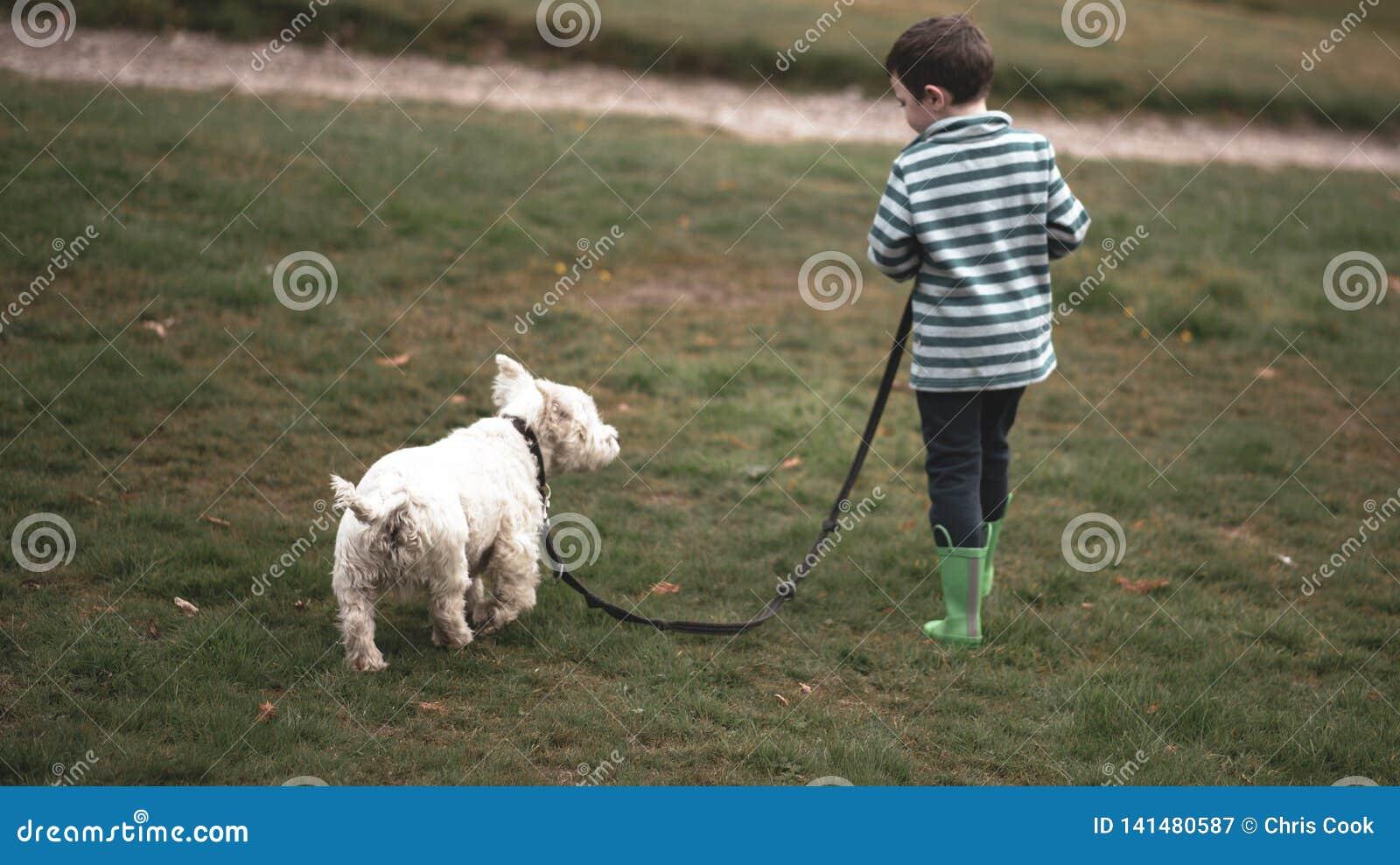 Um menino pequeno anda um Westie através de um parque