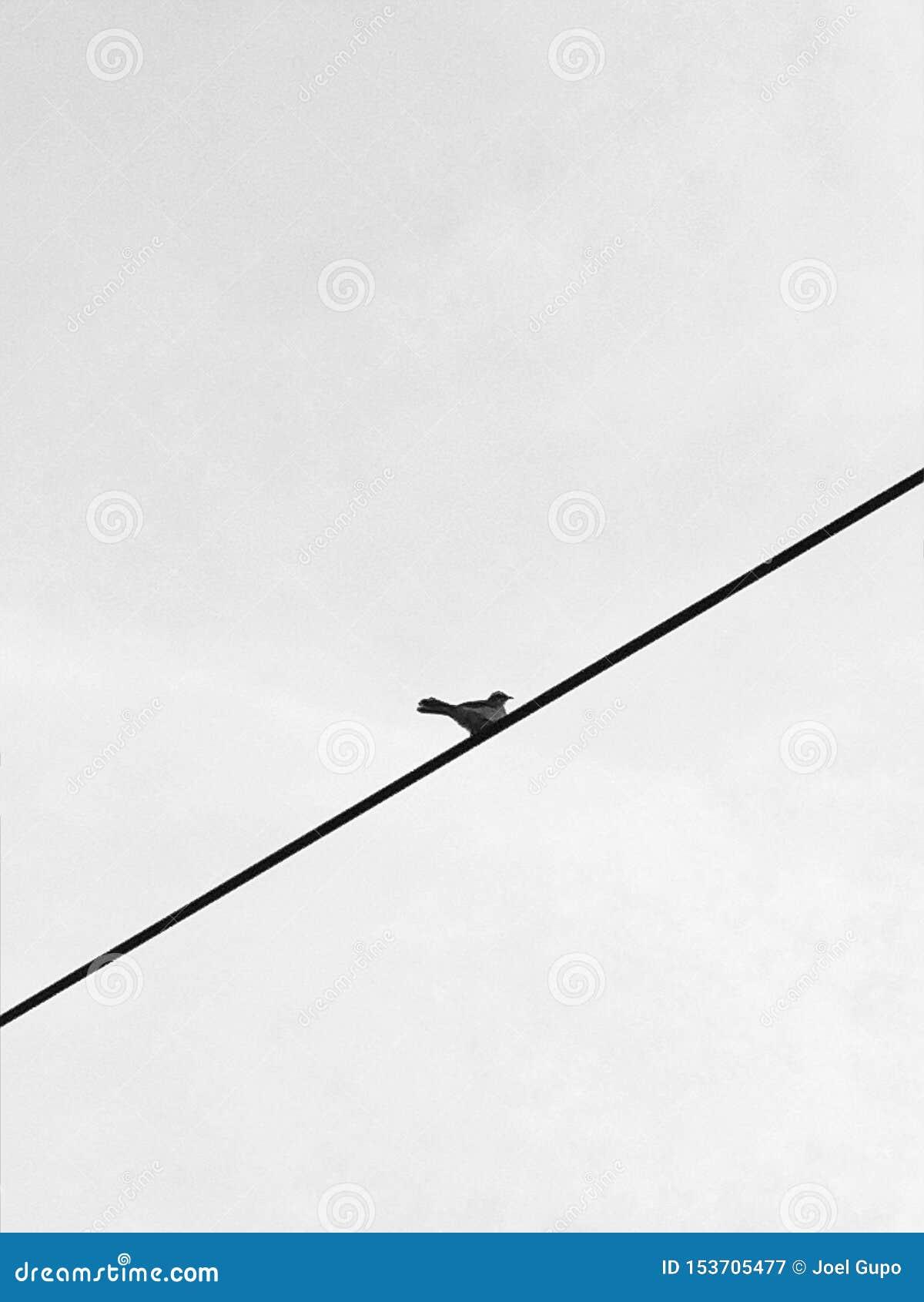 Um pássaro pequeno em um fio