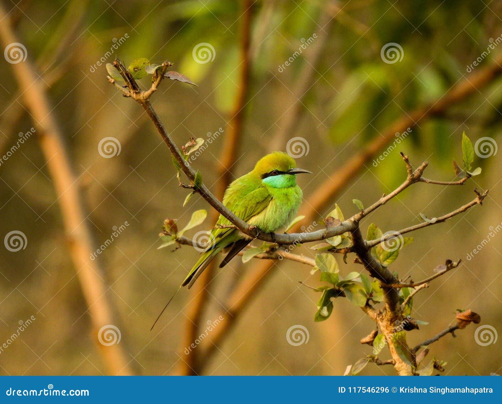 Um pássaro pequeno que senta-se no ramo