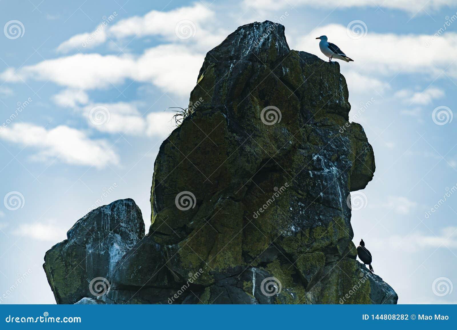 Um pássaro que senta-se em uma pedra no mar