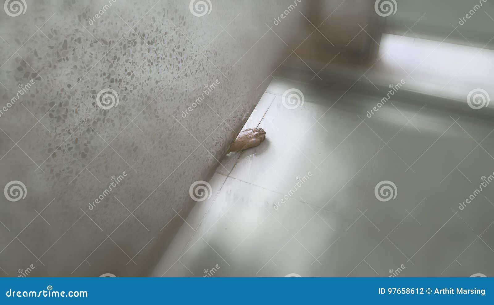 Um pé do cão aparecido no assoalho do toalete público O pé é do cão quem venha ao toalete seguinte para esfriam para baixo de um