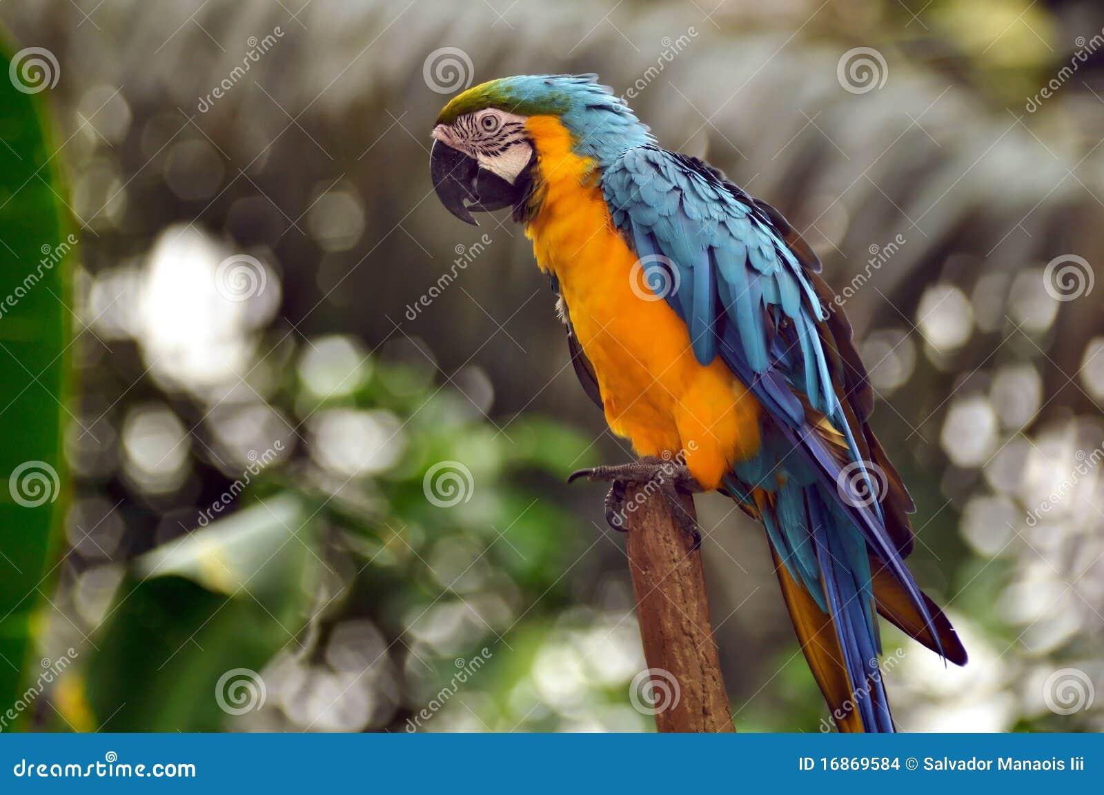 Um papagaio bonito