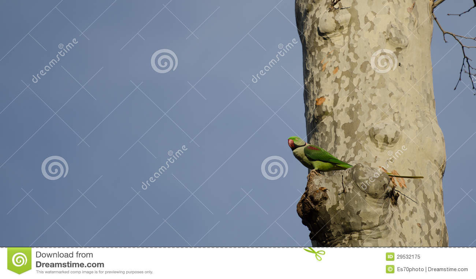 Um papagaio em uma árvore