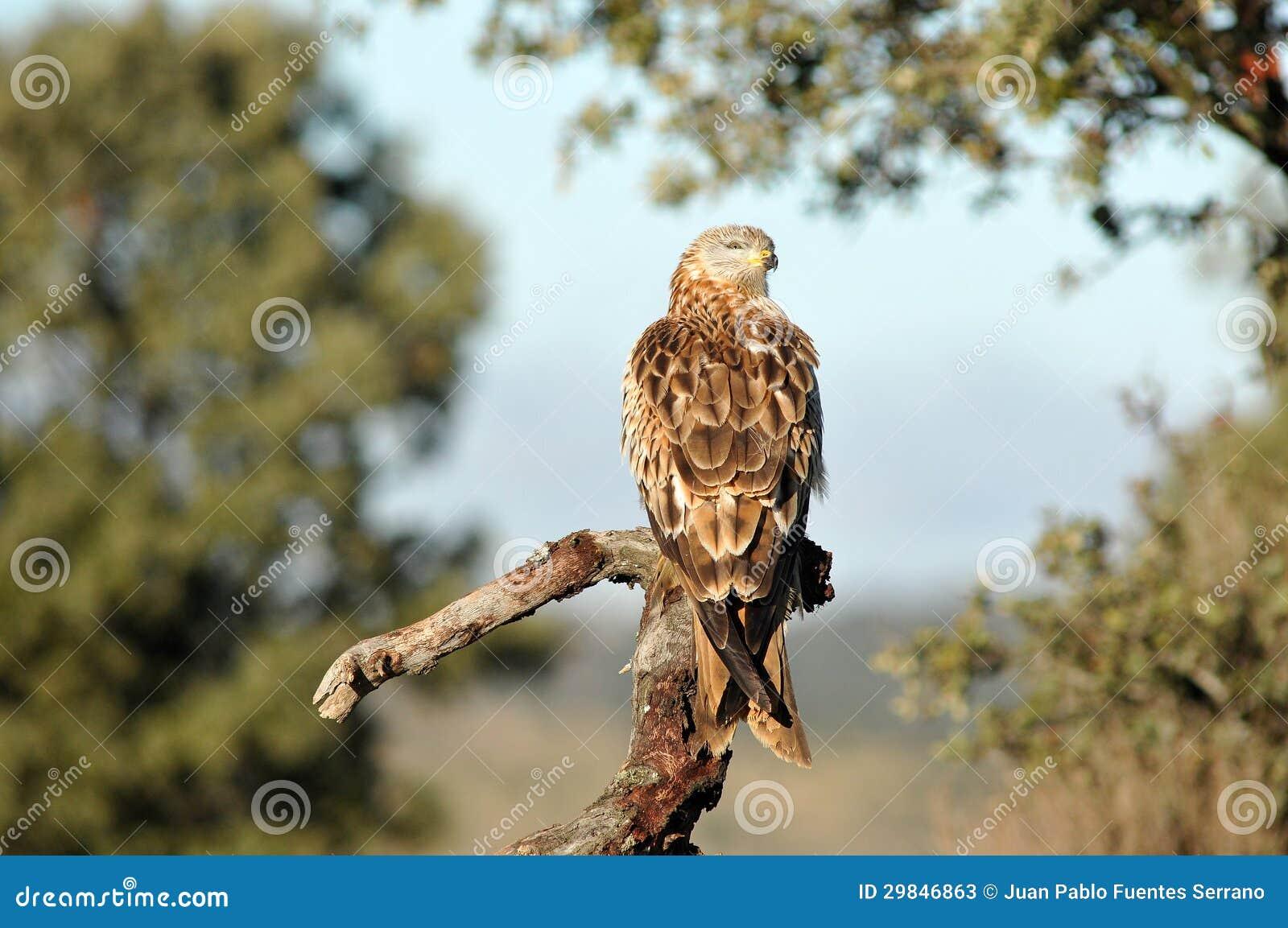 O papagaio empoleirou-se na torre de vigia de madeira no campo