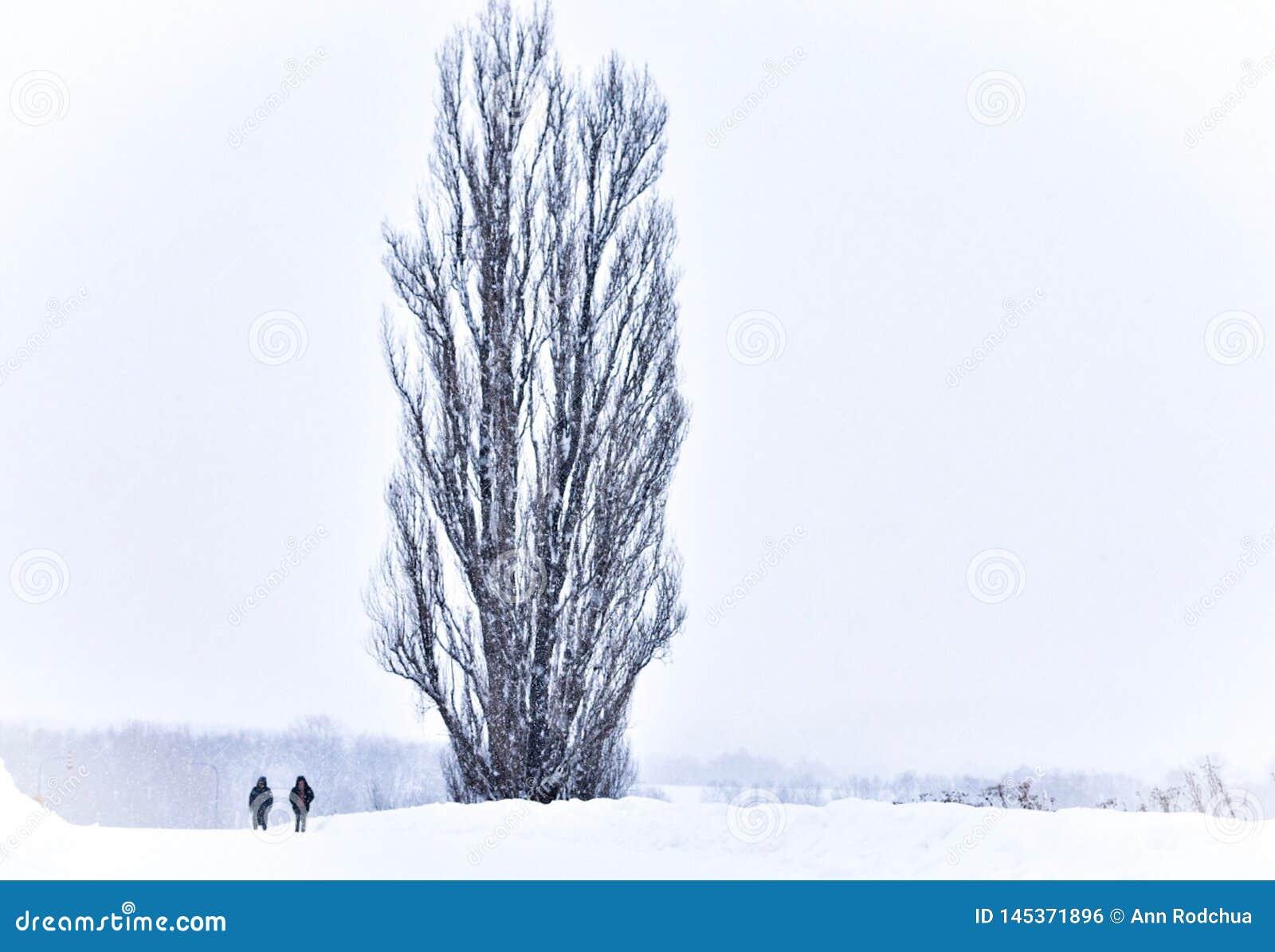 Um par ao lado da árvore de Ken e de Mary