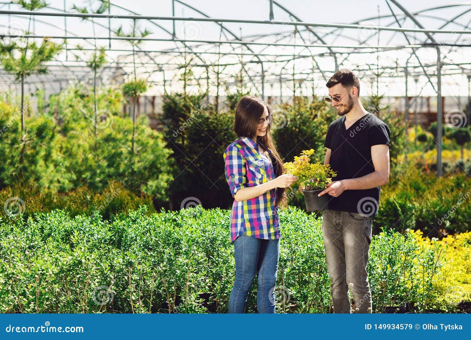 Um par novo, um menino em um t-shirt preto e uma menina nos vidros, mantêm um potenciômetro com uma planta verde Compra em uma es