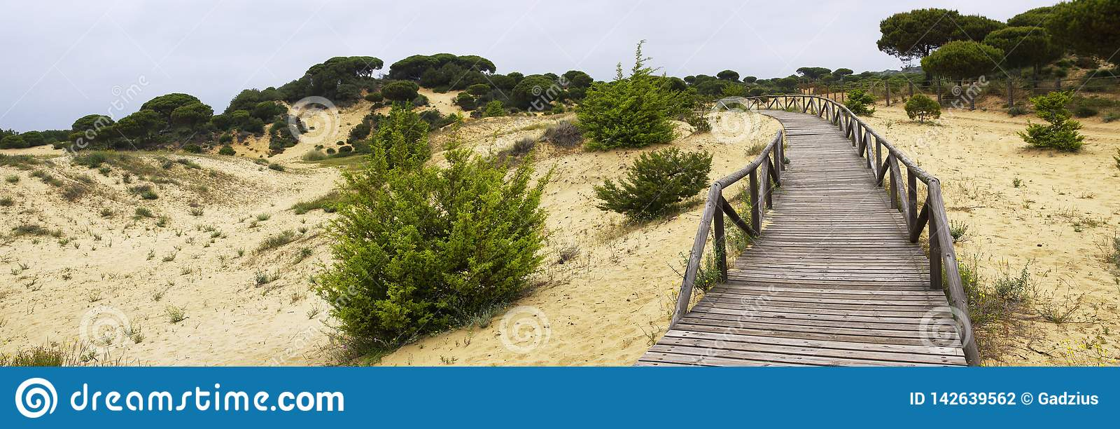 Um passeio à beira mar de madeira de enrolamento através das dunas perto de Matalascanas, província Huelva