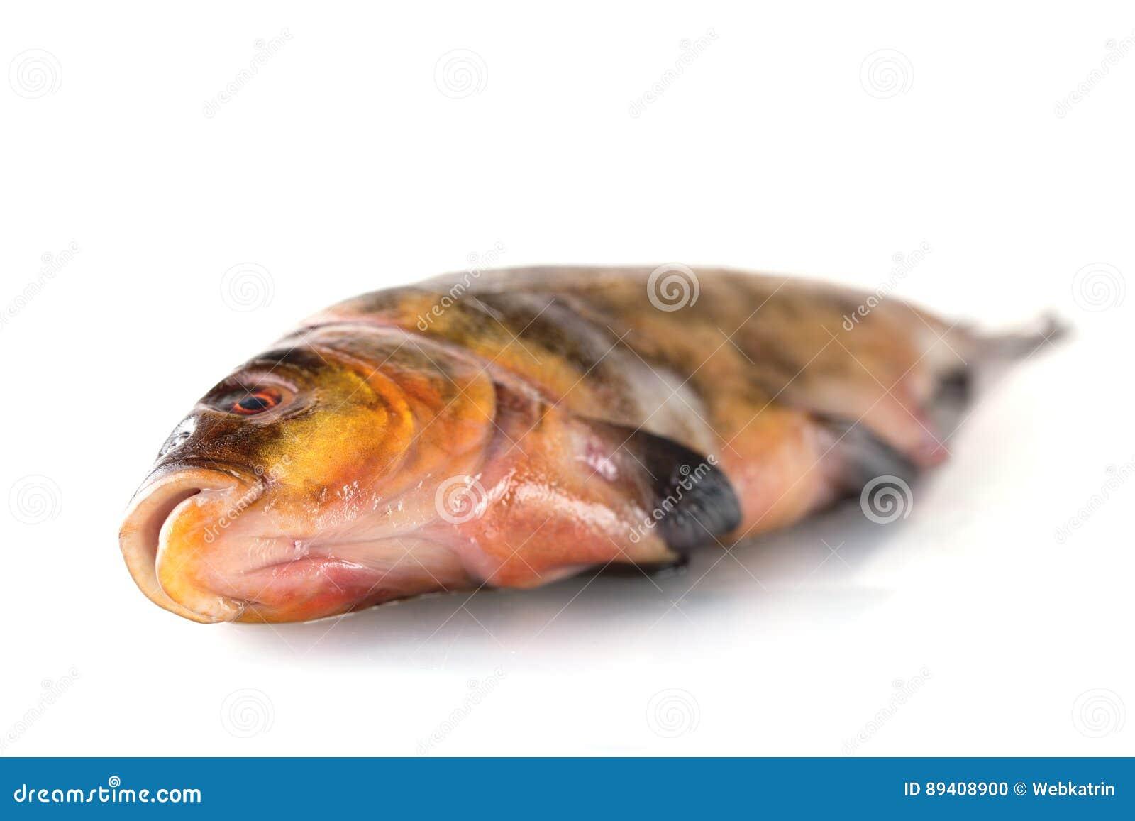Um peixe cru fresco em um fundo branco