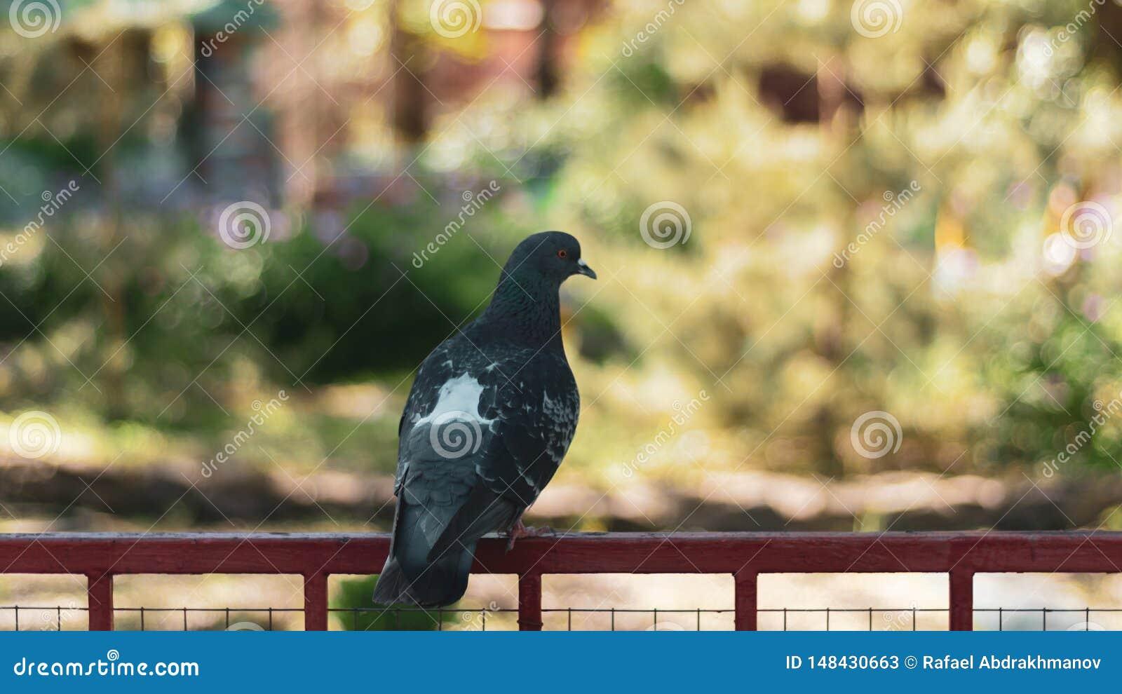 Um pombo triste s? no parque senta-se em uma vara do ferro